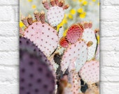 Desert Blossoms, Yellow, Red, Pink Art Photography, Prickly Pear Cactus, Succulent Modern Art, Blooms, Flowering, Springtime Arizona
