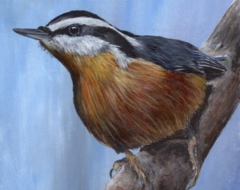 Bird Art Painting Red Breasted Nuthatch SFA Wildlife Original hand painted bird acrylic painting by Australian Artist Janet M Graham