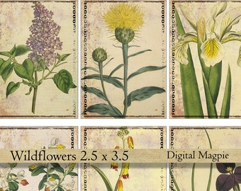 Wildflowers digital collage sheet vintage Victorian flower images atc gift tag aceo 2.5 x 3.5 shabby tattered paper