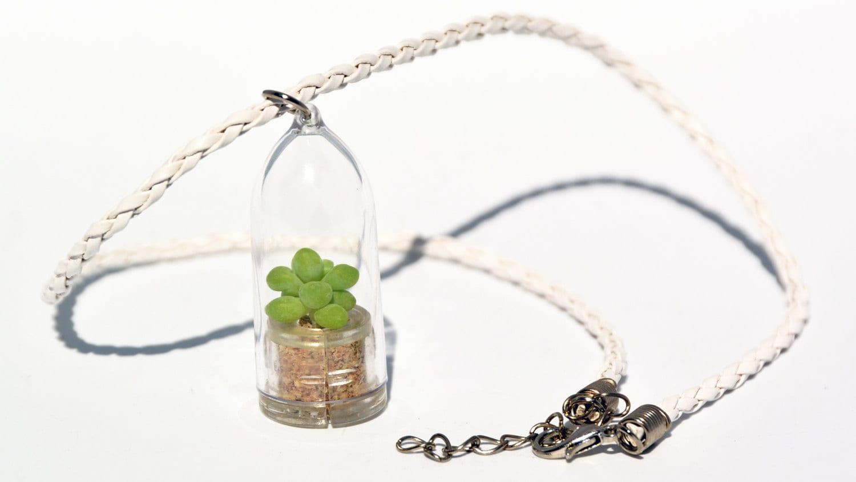 live plant necklace terrarium succulent bubbly terrarium
