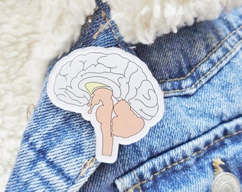 Brain Weird Science Anatomy Anatomical Biology Body Parts Organ Brain Pin Badge Brooch