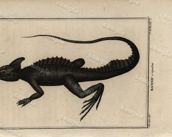 Original Antique Natural History copperplate of Reptiles - Histoire Naturele by the Buffon de comte - 1790 - Bassttic Lizard Black and white