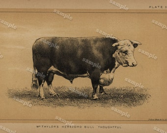 1888 Cattle and Dairy Farming Engraving by Julius Bien Natural History decorative art Authentic  Hereford bull  Cow farm animal