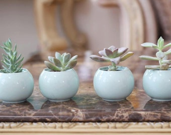Wedding succulent gifts