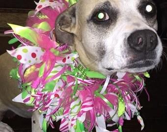 Fun Summer Dog Collar