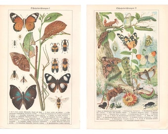 Bugs in Nature, Old German Lithograph Print, Insects, Butterflies Wall Print, Zoological Wall Decor