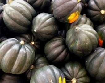 "Organic ""Tuffy Acorn Squash"" seeds, great keeper winter squash, FREE SHIPPING"