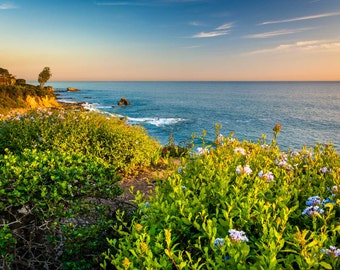 Flowers and view of the Pacific Ocean from cliffs in Corona del Mar, California. | Photo Print, Stretched Canvas, or Metal Print.