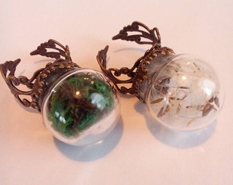 Beautiful dandelion and moss rings