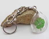 Acrylic Charm Trigger Snap Keychain with a Real Genuine Five Leaf Clover - AK-5J
