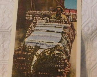 Vintage Bales of Cotton Ready for Shipment Postcard