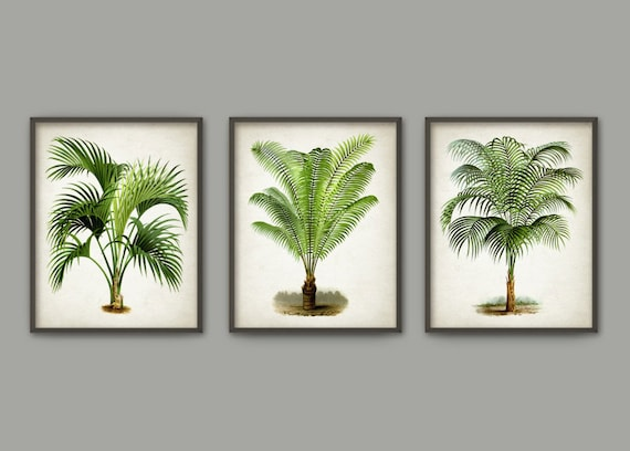SPECIAL OFFER Palm Tree Set Of 3 Prints Tropical By