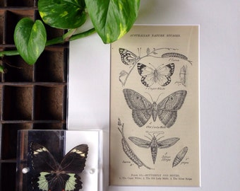 Vintage book plate...Butterflies and Moth