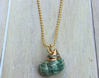Golden ballchain necklace with gold-teal sea snail conch shell pendant