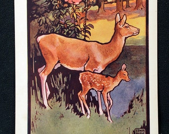 Edwin Noble Color Illustration Lithograph entitled Deer * Delightful c1920s Childrens Book Page Print Beautiful Color