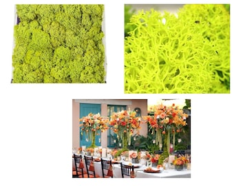 Crafting Moss Preserved Chartreuse, 8oz Covers 200 Cubic Inch, Long Lasting Moss For Dressing, Enhanced Color Moss For Wedding Decoration
