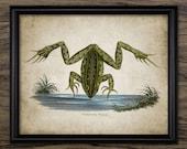 Frog Print - Frog Illustration - Frog Decor - Vintage Frog Illustration - Digital Art - Printable Art - Single Print #130 - INSTANT DOWNLOAD