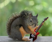 Gifts for Musicians, Funny Prints, Squirrel Print,Music Gifts,Guitarists,Rock and Roll,Music Art,Squirrel Photograph,Electric Guitar,Warlock