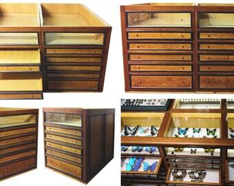 Cabinets of entomology - Deyrolle