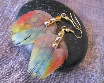 Multicolored Parrot feather earrings.