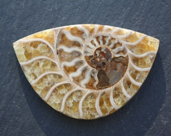 Ammonite, Fossil, Large, Designer, Cabochon