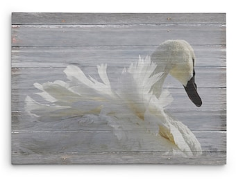 Ruffled Feathers Canvas Print, Winter Swan Photo, Lodge and Cabin Decor, Gallery Wrap Canvas