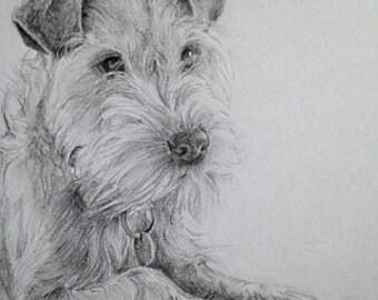 Pet Portrait Comission - A4 pencil sketch