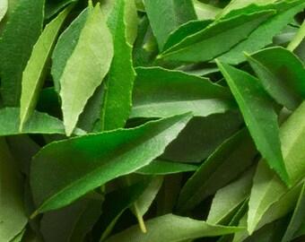 Shade Dried Curry leaves (Shade dried Murrya khoenigi leaves)