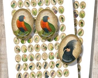 Vintage Parrots - Digital Collage Sheet - 18 x 25 mm Ovals - Jpg Pdf Images for Pendants Magnets Earrings - Printables, Instant Download a8