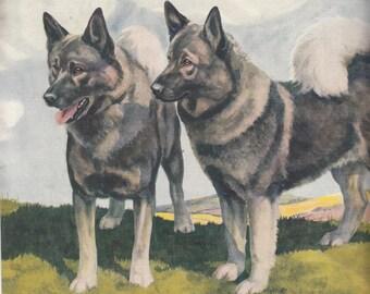 "Linen Like Texture Color Print 1937/Elkhounds/8"" X 10.5"""