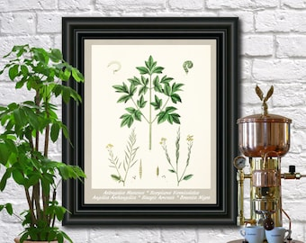 Mustard Botanical Print Vintage Mustard Illustration Kitchen Wall Art Poster  0469