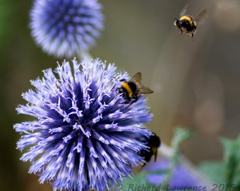 Pollen fest