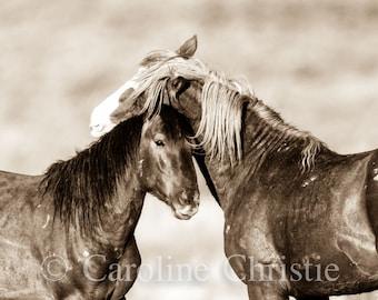 Wild Horse Photography, Horse Photographs, Sepia Tone, Mustangs.
