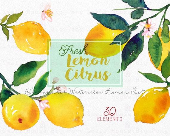 Lemon Watercolour Clipart Set. Handmade, watercolour clipart, summer, wedding diy elements, fruit - Fresh Lemon Citrus Elements