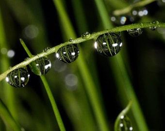 onion rain (water 5)