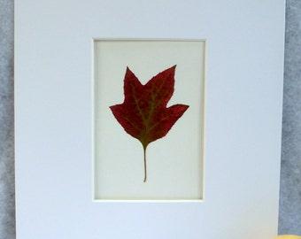 Real Pressed Oak Leaf Hydrangea Botanical Herbarium Specimen Art 11 x 14  with Mat