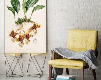Botanical Illustration - Vintage Posters - Prints - Wall art - Home Decor
