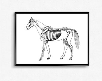 Black and White Horse Anatomy Art Print - Horse Skeleton Poster - Horse Wall Art - Science Ink Drawing/ Veterinarian gift - Anatomy Wall Art