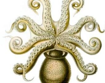 Ernst Haeckel Octopus Digital download ocean life poster Vintage artwork image instant download Supplies scrapbooking Ihappywhenyouhappy
