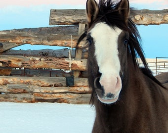 Winter Mare, Horse, Snow, Western, Wall Art, Corral, Blue, Brown