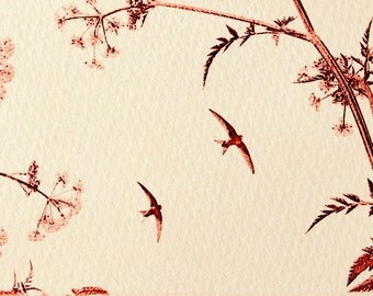 Original etching: 'Swifts and Cow Parsley', hand-printed from a solar plate. Limited edition.