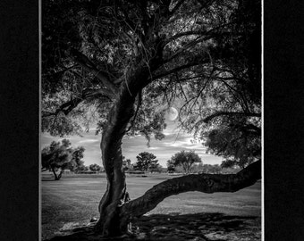 Photo Black and White Trees and moon