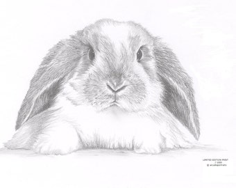 LOP EARED RABBIT Bunny Limited Edition art drawing print signed by Uk artist