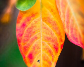 Nature photography - fall contrast