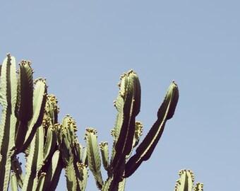 southwest desert, Desert Cactus Print, Cactus Print, Southwest Photography, Minimal Landscape, MCM Large Format Print, Large Print