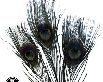 3 - Small - Black Peacock Feathers