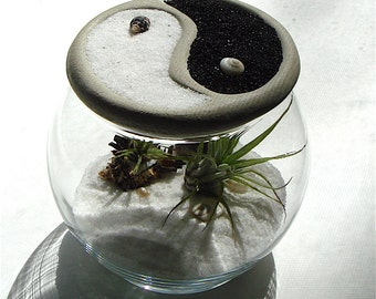 Terrarium with Air Plants and Yin Yang Bowl Stone Top || Unique