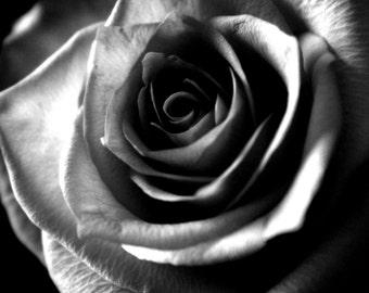 """Flower Photography, Rose, Nature, Macro, Black and White, Romantic, Bohemian, 6x9 or 8x12. """"Rose, B&W""""."""