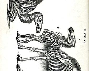 Camel Skeletons Blank Notecard Halloween Handmade Vintage Image