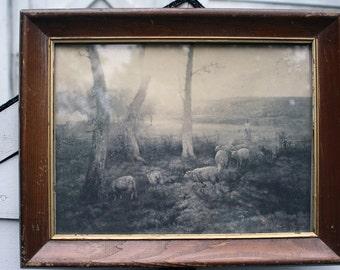 Vintage Print Pastoral Sheep